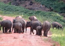 Pygmy Elephants in Borneo on Travel with Me tour