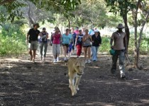 Walking with the Lions with Travel with Me